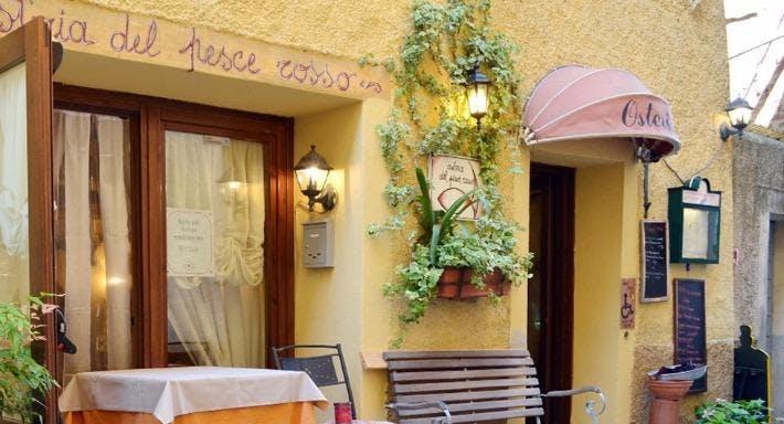 Osteria del Pesce Rosso Firenze image 5