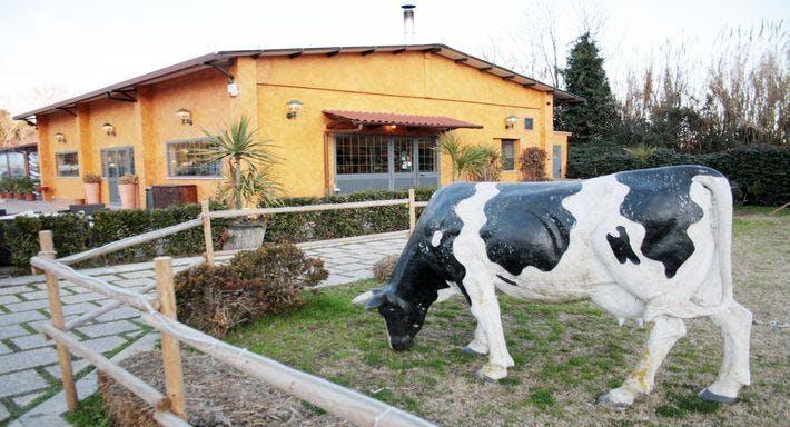 Vaca Loca Roma image 15
