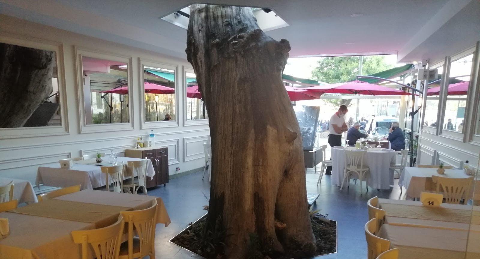 Photo of restaurant Çınaraltı Restaurant in Ortaköy, Istanbul