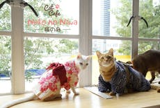 Cat Café Neko no Niwa