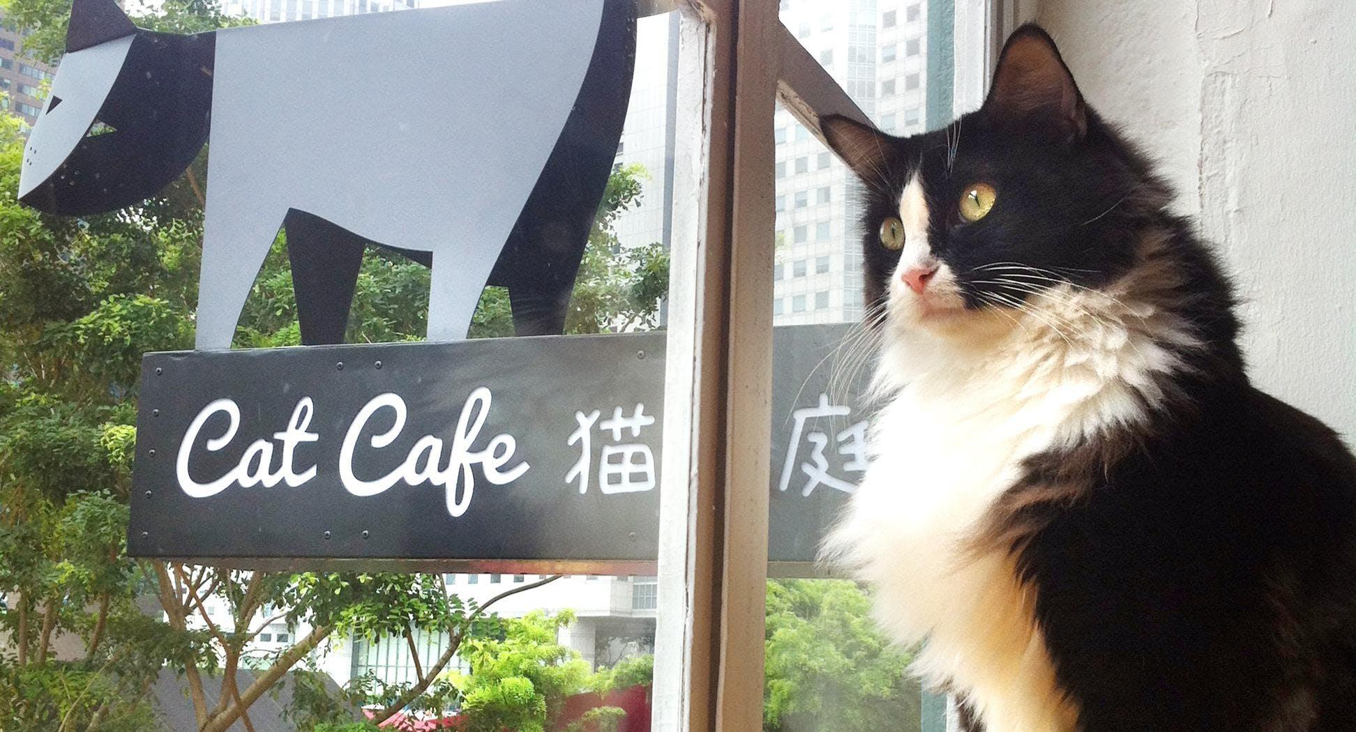 Cat Café Neko no Niwa