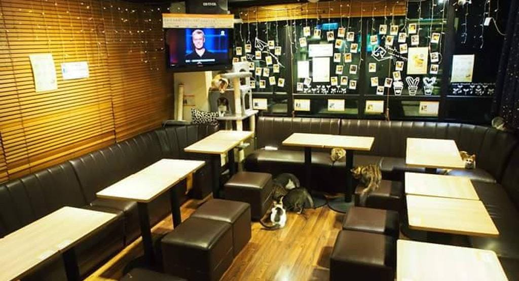 Meow Mi Home 貓咪貓咪HOME - Hanway Branch 恆威店 Hong Kong image 1