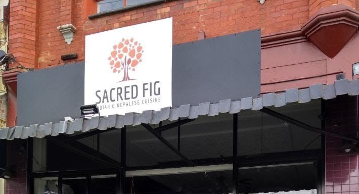 Sacred Fig Melbourne image 2