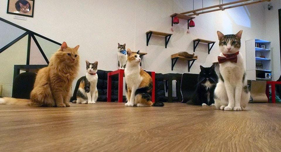 The Cat Cafe - Bugis